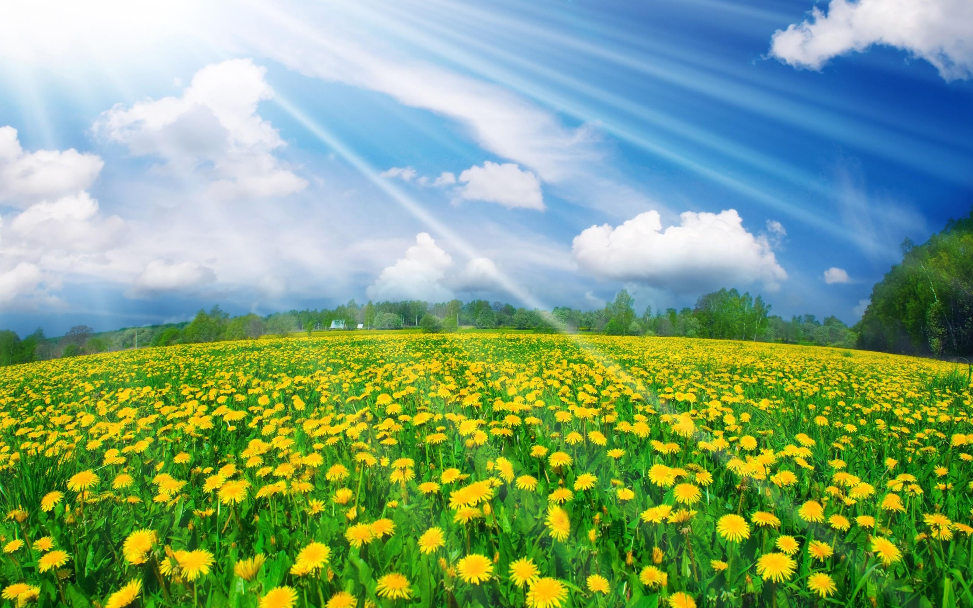 Duelos de edición Field-of-flowers